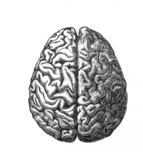 BMP and Noggin's effect on the brain
